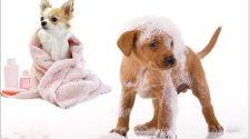laver son chien