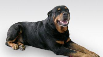 Assurance chien 2eme categorie