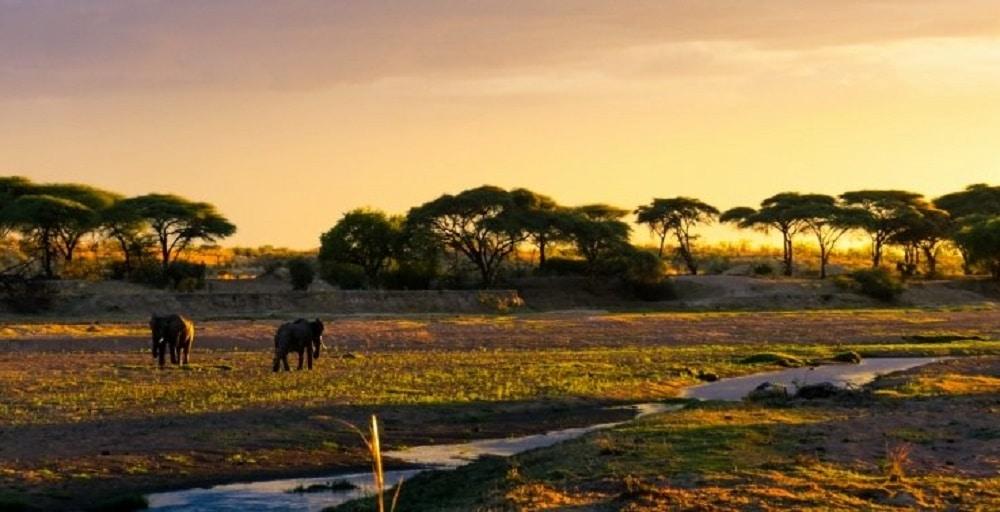 un voyage Tanzanie