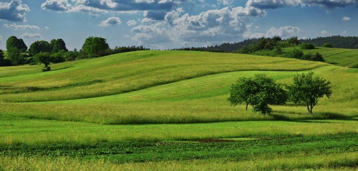L'agriculture raisonnée : mieux comprendre son problème pour envisager une solution durable